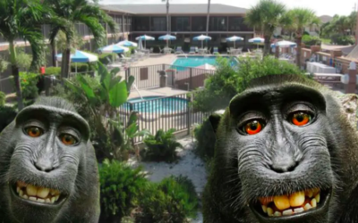 Florida timeshare company accused of monkey business by British zoo owner